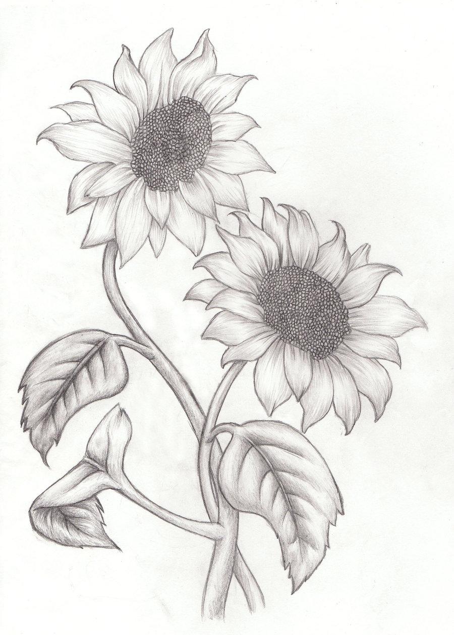 900x1257 Eleletsitz Sunflowers Drawing Tumblr Images