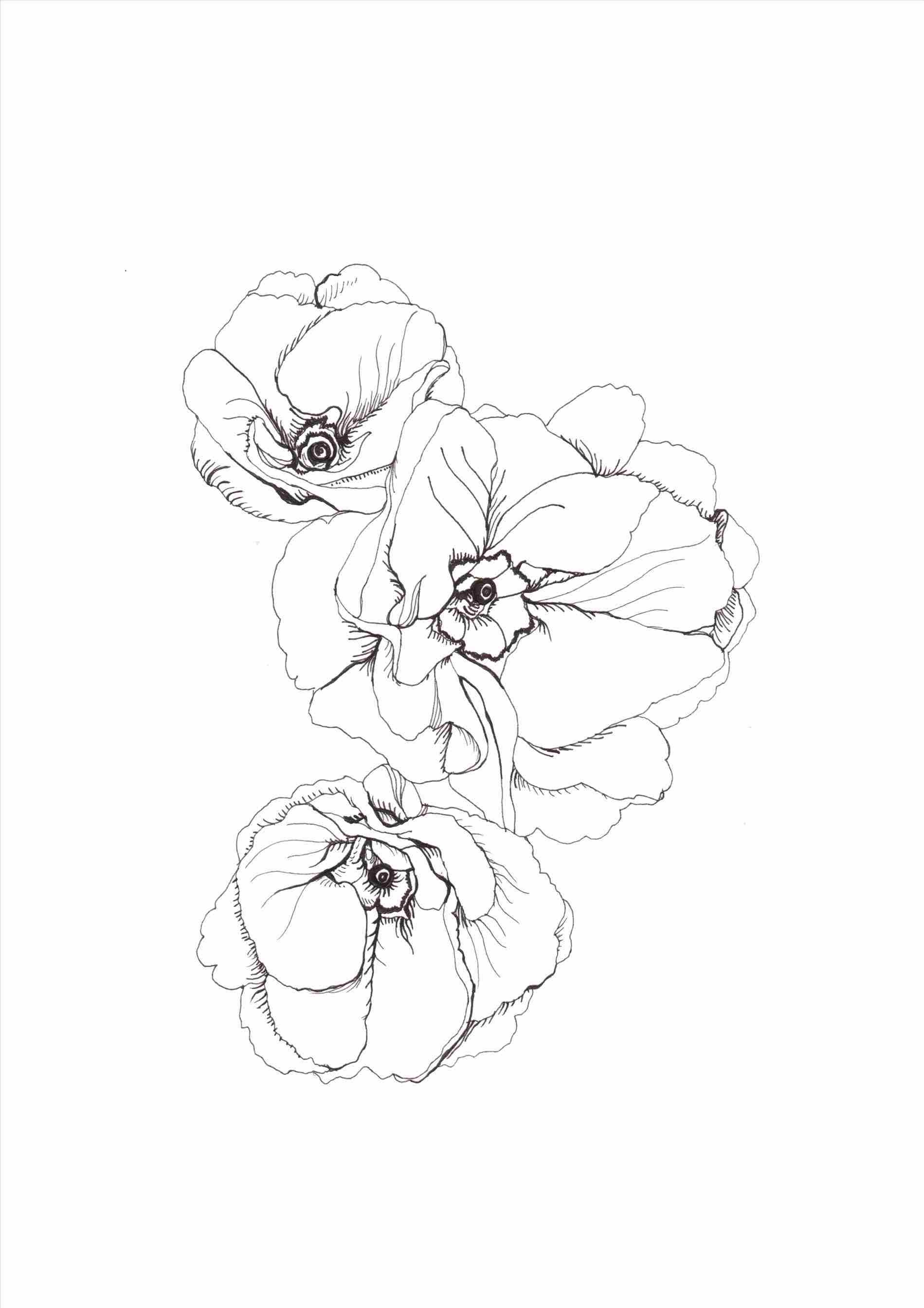 1899x2687 Garden Drawing Tumblr