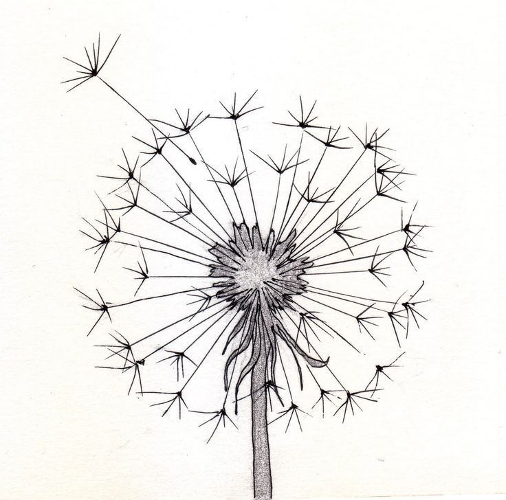 736x728 Flower Clipart Tumblr