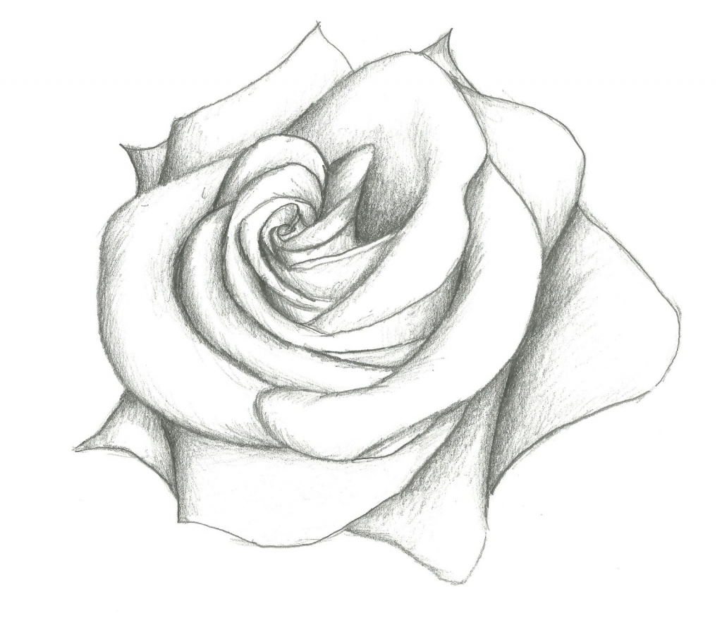 1024x876 flower pencil drawing tumblr easy flower pencil drawing