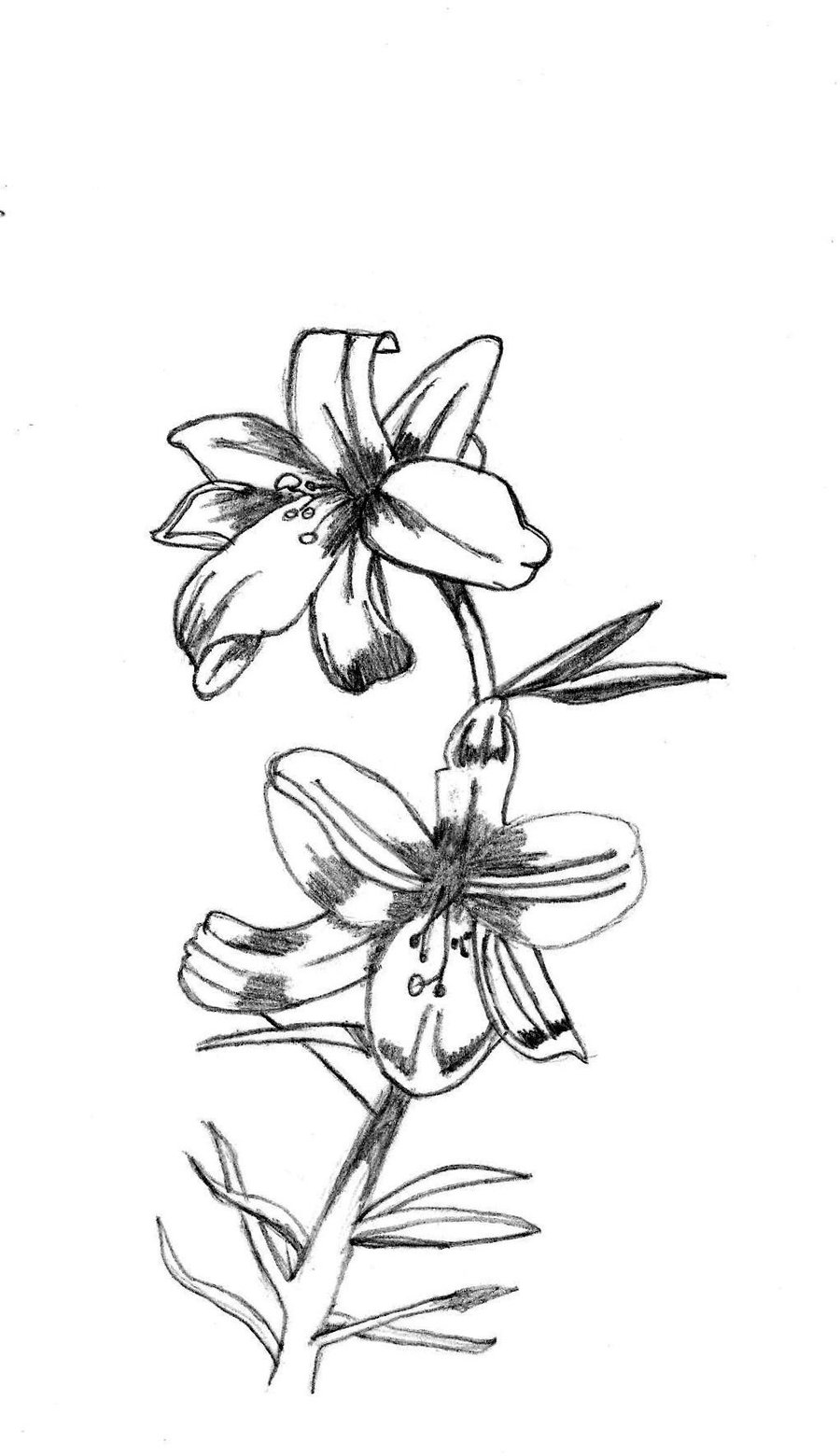 Tumblr Flower Drawing