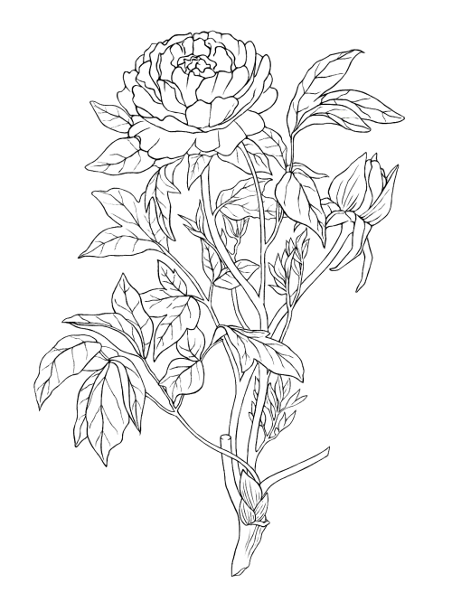 Tumblr Flower Drawing at GetDrawings com   Free for personal use