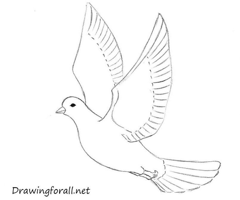 805x672 Drawing Beginner Flower Drawings As Well As Beginner Drawings