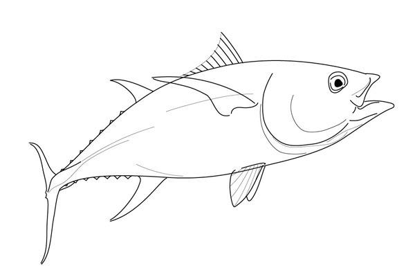 Tuna Drawing at GetDrawings.com | Free for personal use Tuna Drawing ...