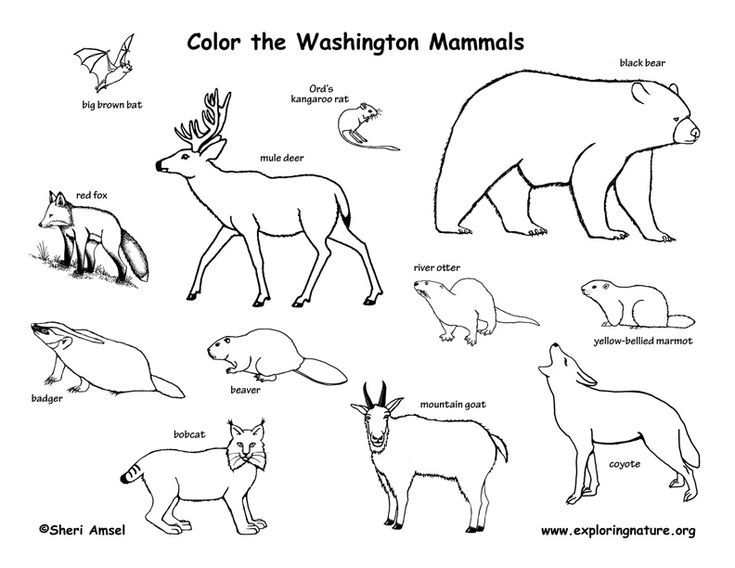 735x568 31 Best Animals To Colour Images On Adult Coloring