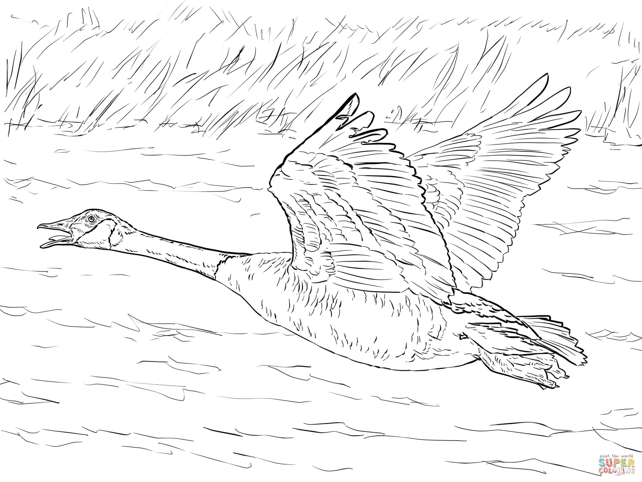 2048x1536 Canada Goose In Flight Coloring Page Free Printable Coloring Pages