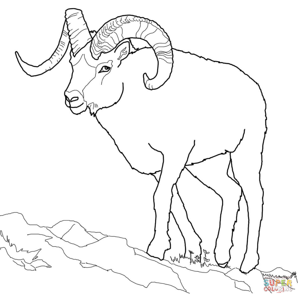 1200x1200 Dall Sheep Coloring Page Free Printable Coloring Pages