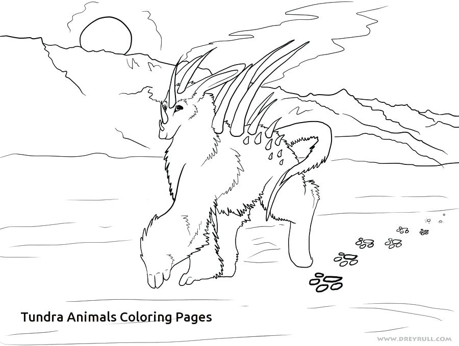 900x680 Ecosystem Coloring Pages Pictures Of Animals To Color Coral Reef