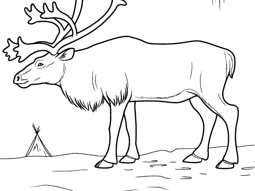 1024x768 Tundra Animals Coloring Pages
