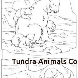 268x268 Tundra Animals Coloring Pages Freecolorngpages.co