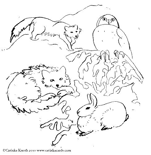 488x500 Tundra Animals Coloring Pages Meat Wolverine Animal Coloring Pages