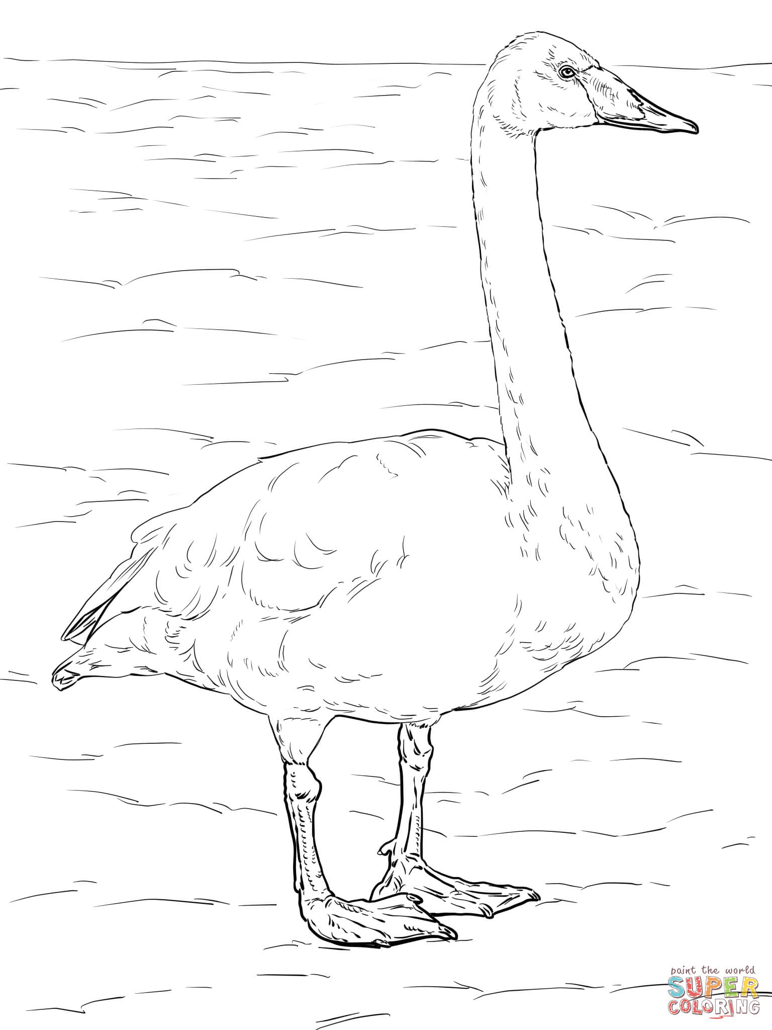 1536x2048 Whooper Swan Coloring Page Free Printable Coloring Pages