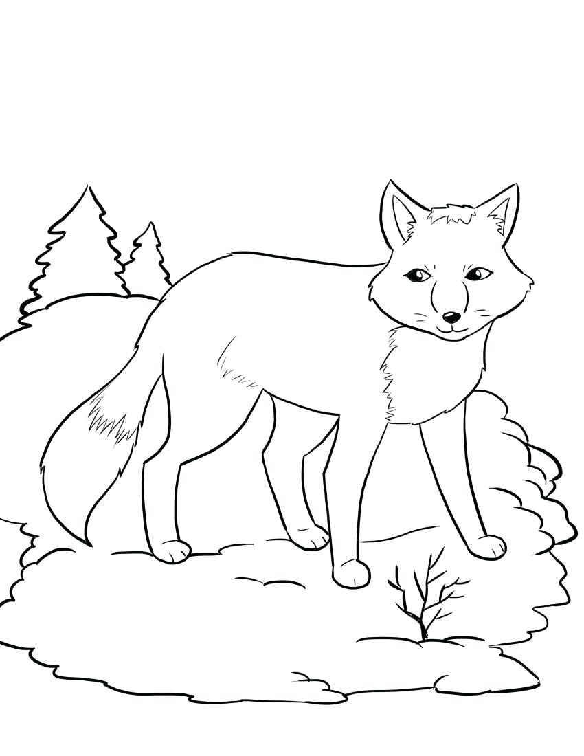850x1100 Coloring Arctic Coloring Pages Fox Summer Coat Page Free