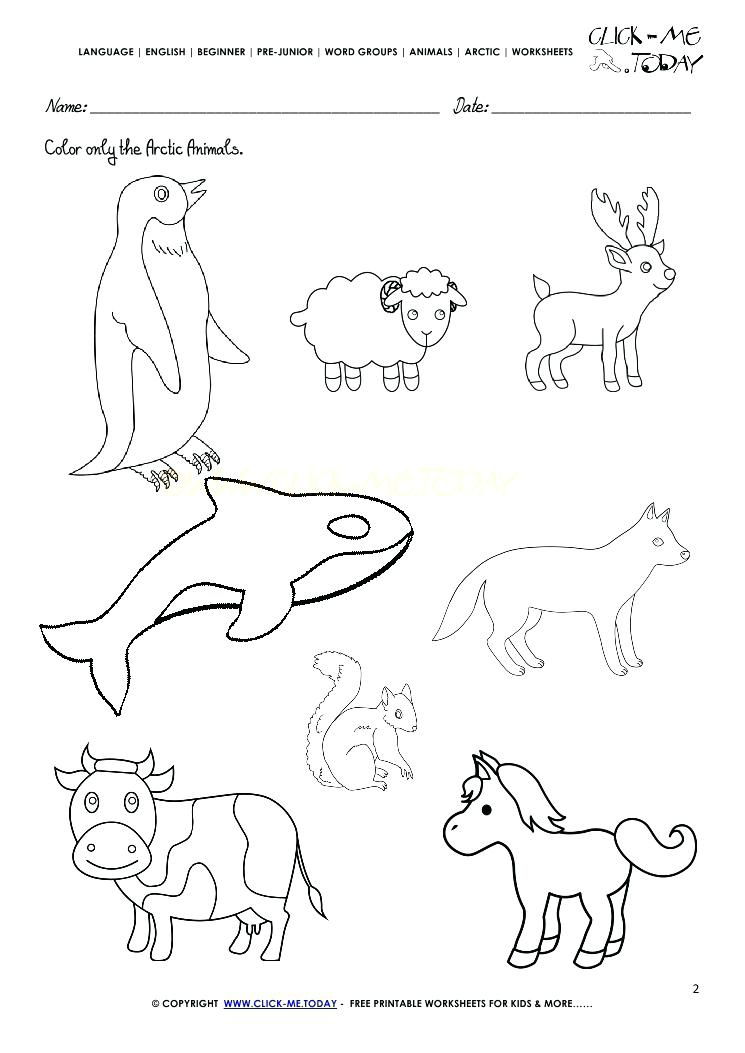 745x1053 Arctic Animals Coloring Pages For Preschoolers 5 Best Images