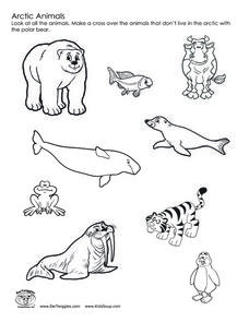 228x295 Arctic Animals Worksheet Hot Resources 2.4 Arctic