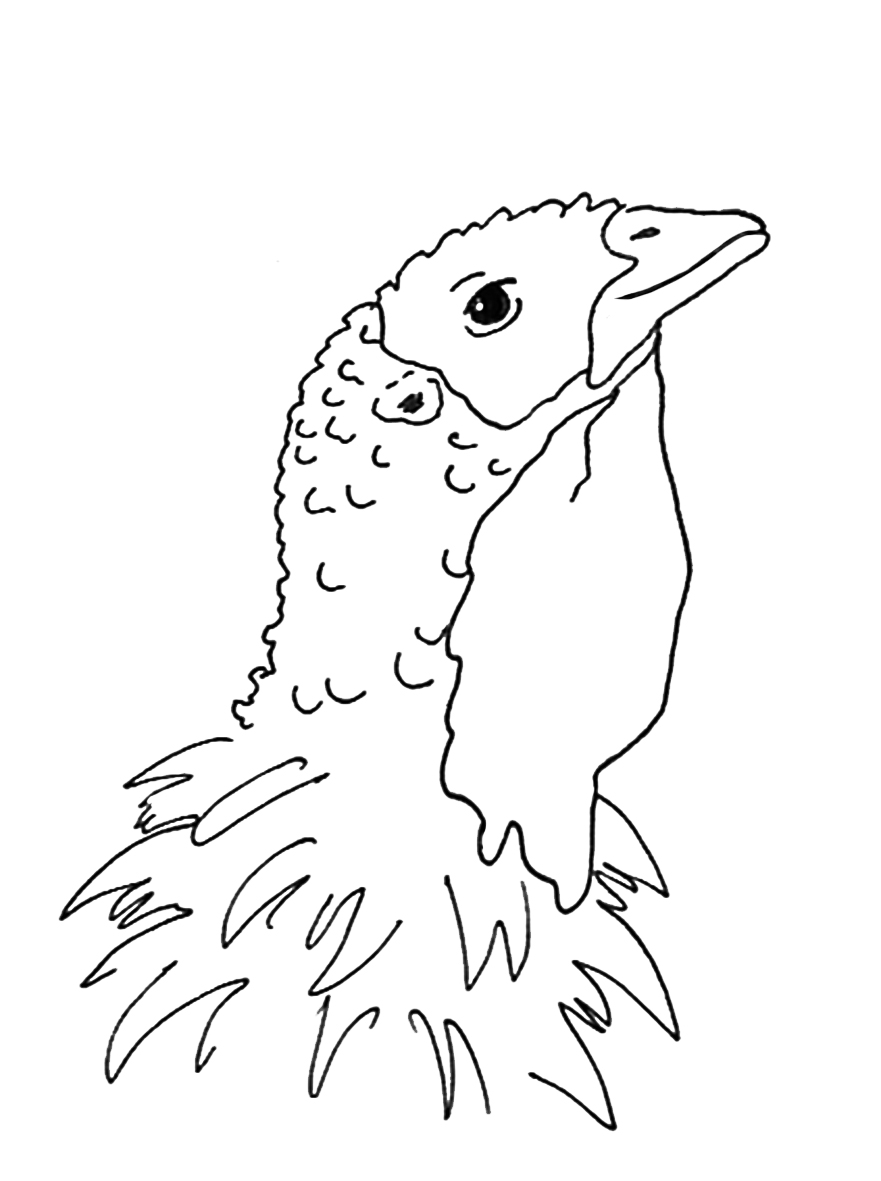 881x1181 thanksgiving coloring pages - Coloring Pages Of Turkeys