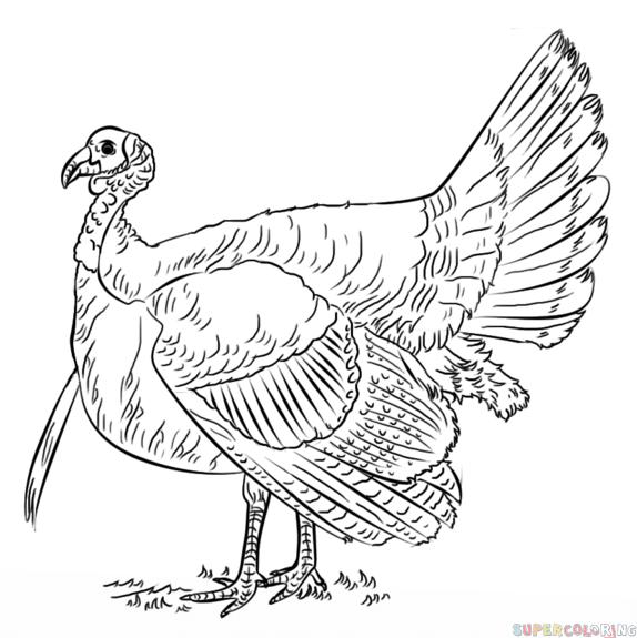 574x575 How To Draw A Turkey Step By Step Drawing Tutorials Birds