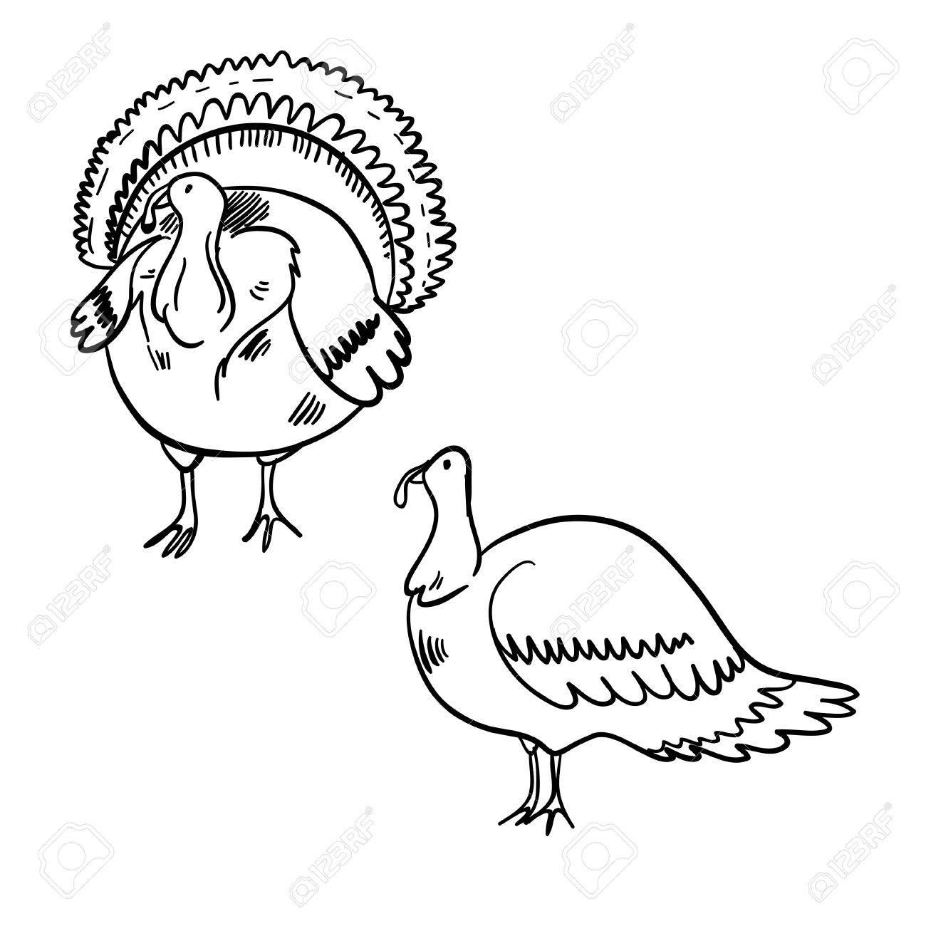 1300x1300 Vector Illustration With Two Turkeys. Funny Cartoon Wonderful