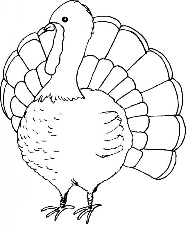 640x790 Turkey Coloring Book Pages 293096
