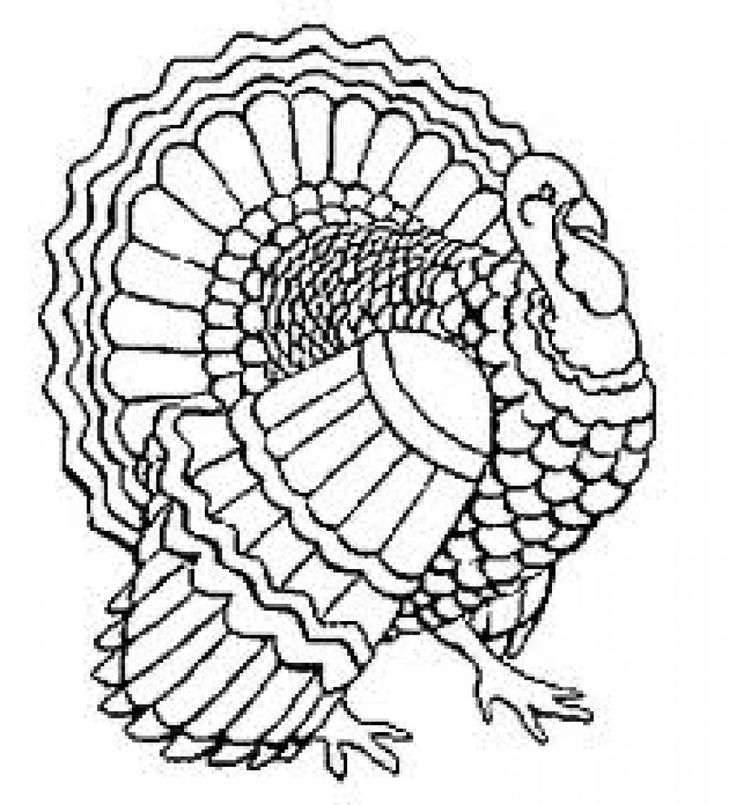 736x805 Coloring Pages Turkey Drawing Turkey Drawing Turkey