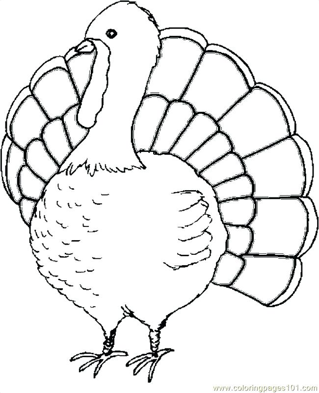 650x802 Picture A Colored Turkey Turkey Drawing Colored Picture