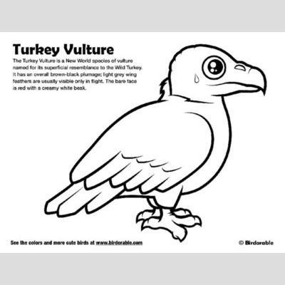 400x400 Drawn Turkey Vulture Cute