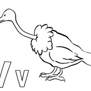 300x300 Adult Vulture Drawing Cartoon Vulture Drawings. Simple Vulture