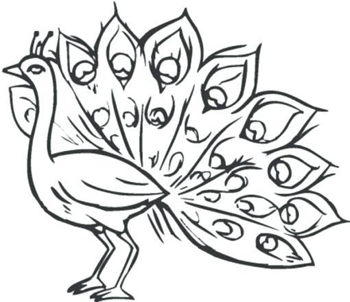 510x440 Feather Coloring Pages Feather Coloring Pages Turkey Feathers