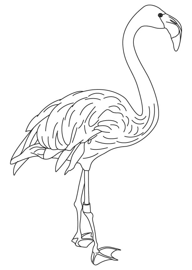 613x860 Turkey Feathers Coloring Pages 292698
