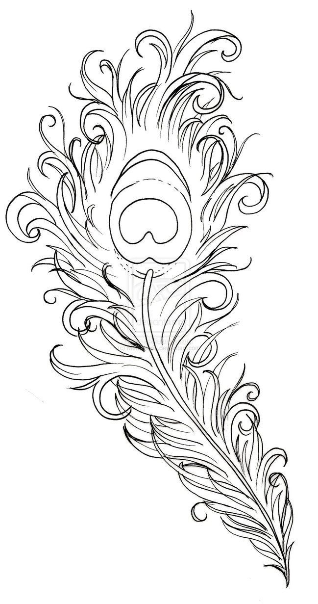 649x1231 Drawn Peacock Peacock Feather