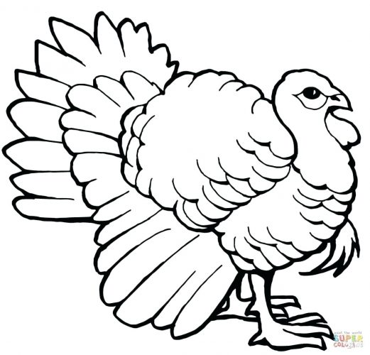 Turkey Feathers Drawing at GetDrawings | Free download