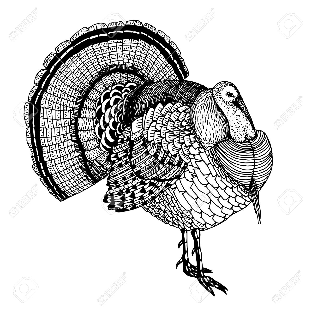 Turkey Hand Drawing