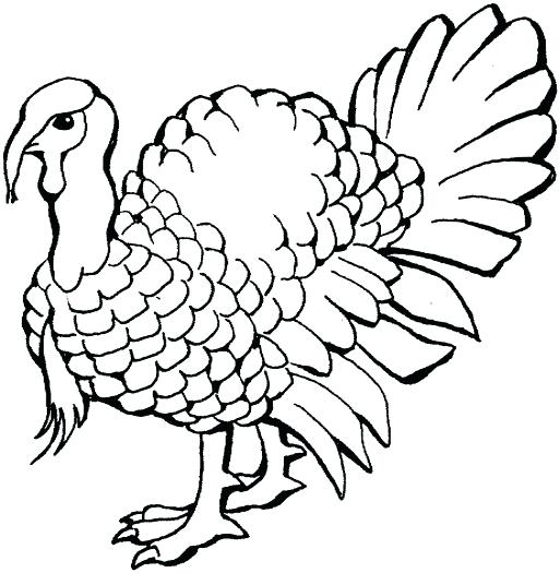 513x525 Wild Turkey Coloring Page Turkey Head Coloring Page Line Drawings