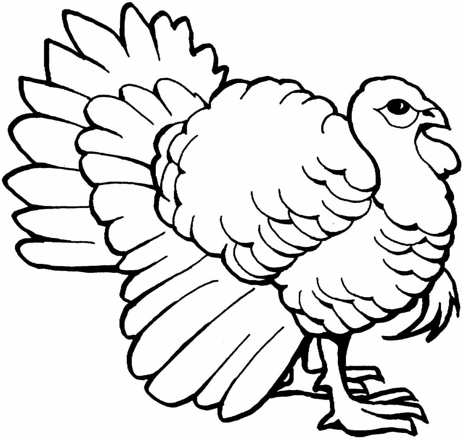Turkey Picture Drawing
