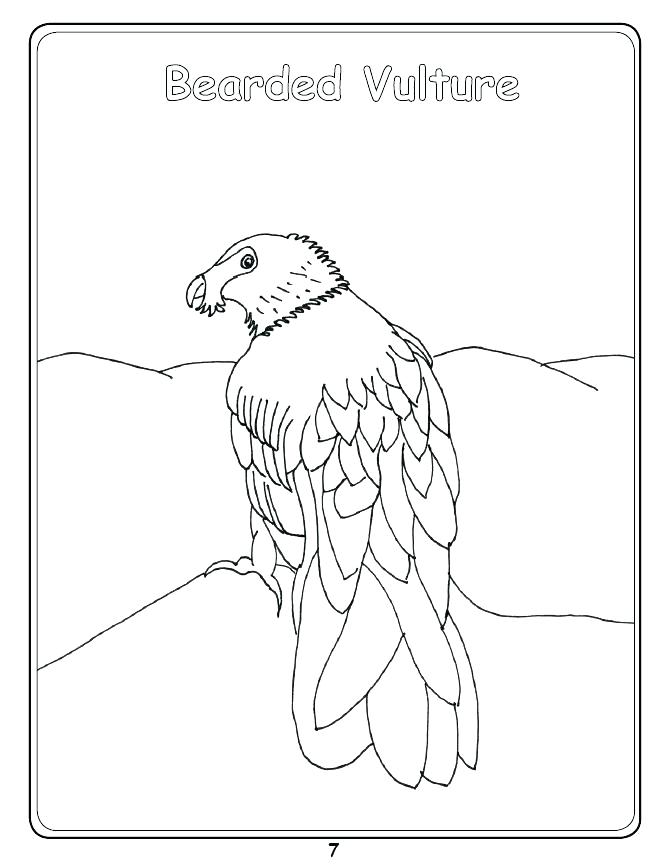 670x868 Vulture Coloring Pages Drawn Turkey Vulture Cute Pencil And