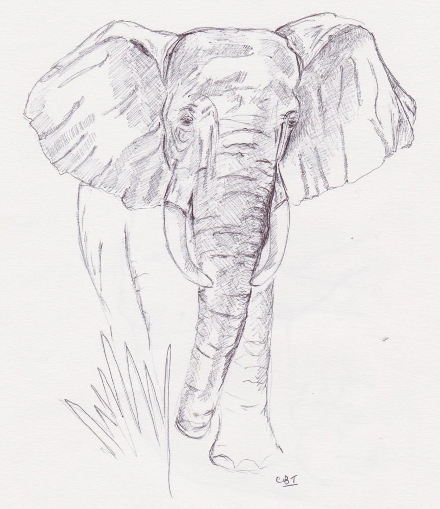 885x1024 Turquoise Moon Male Elephant, Kruger National Park.