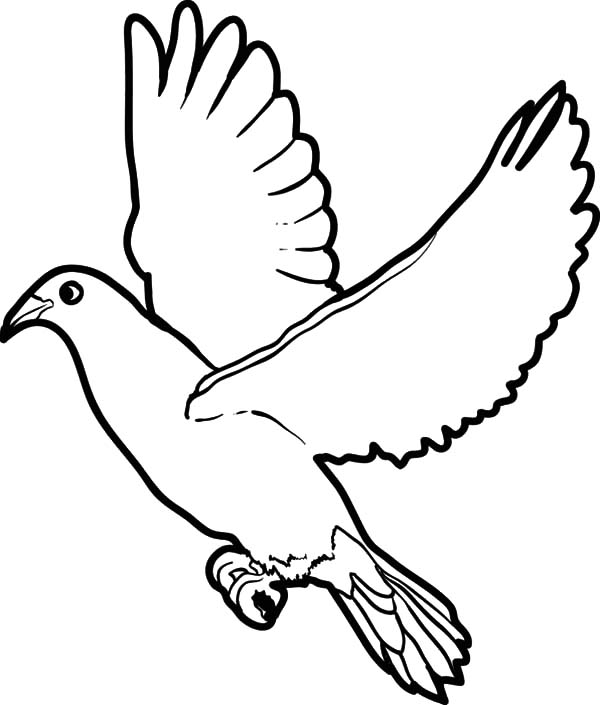 600x705 Big Dove Coloring Page Bird Floating Pages