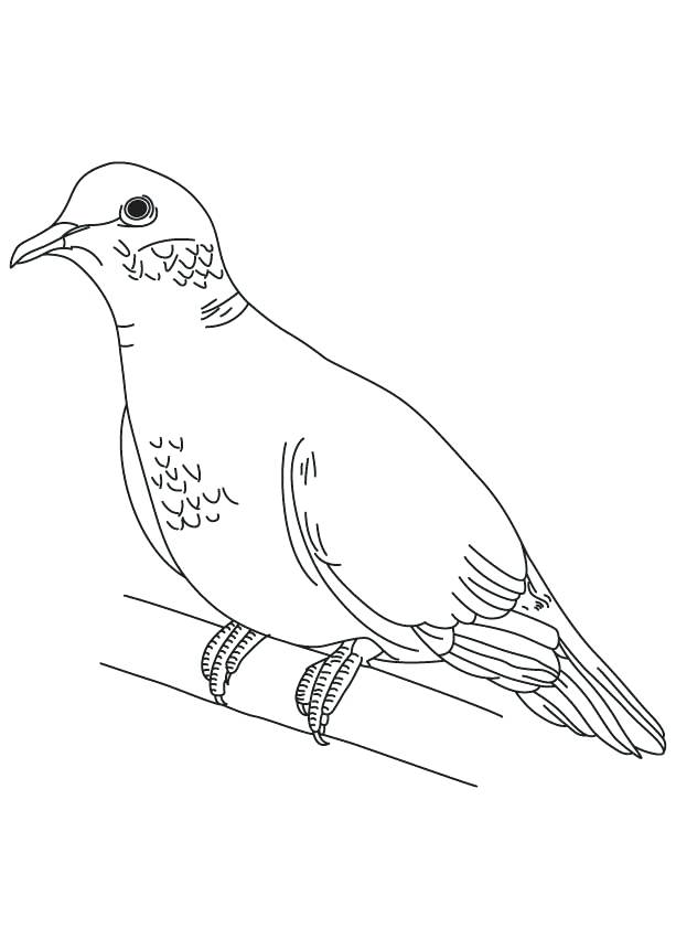 Turtle Dove Drawing at GetDrawings.com | Free for personal use ...