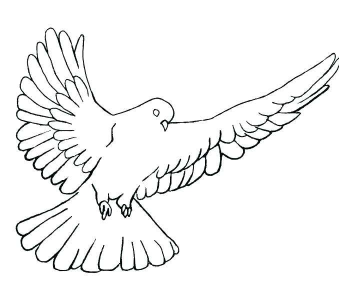 678x600 Doves Coloring Pages Coloring Page Doves Turtle Doves Coloring