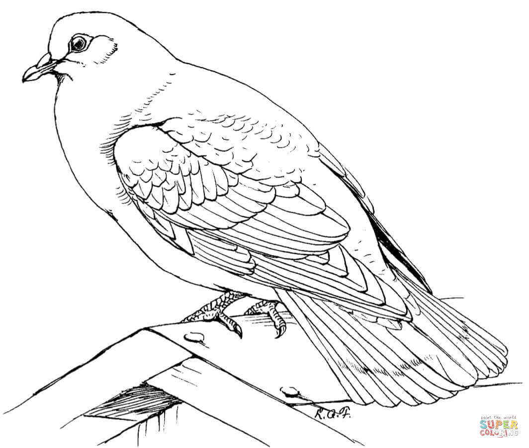1064x900 Doves Coloring Pages Free Coloring Pages