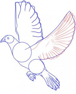 244x302 How To Draw A Dove Tattoos And Piercings Drawing