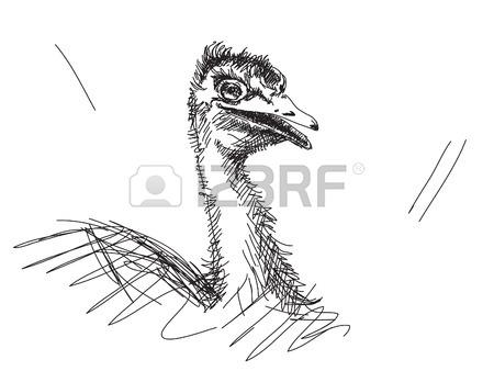 450x338 Sketch Of Turtle Dove Bird Drawn Illustration Royalty Free