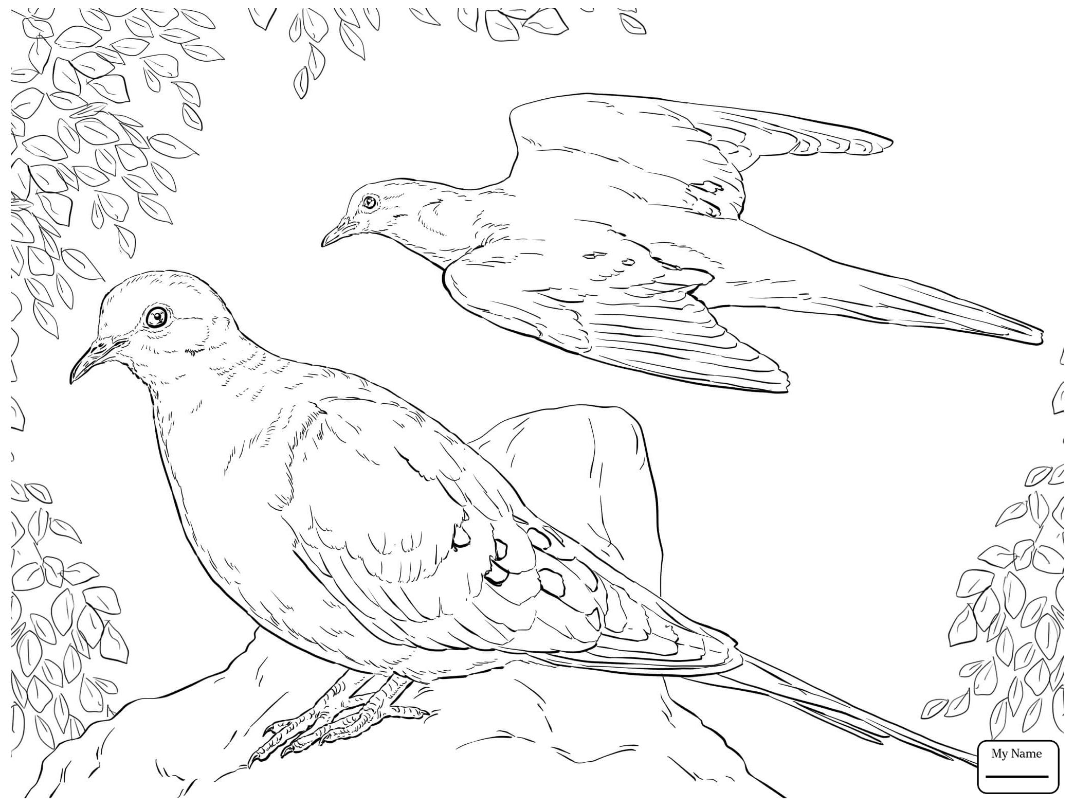 2089x1567 Coloring Pages Birds Dove Bird Azcoloring.club