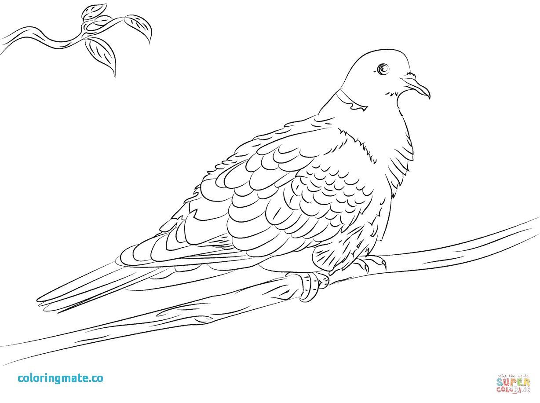 1228x916 Dove Coloring Page Unique Turtle Dove Coloring Page Coloring Pages