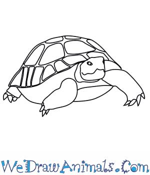 300x350 How To Draw A Desert Tortoise