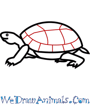 300x350 How To Draw An Eastern Box Turtle