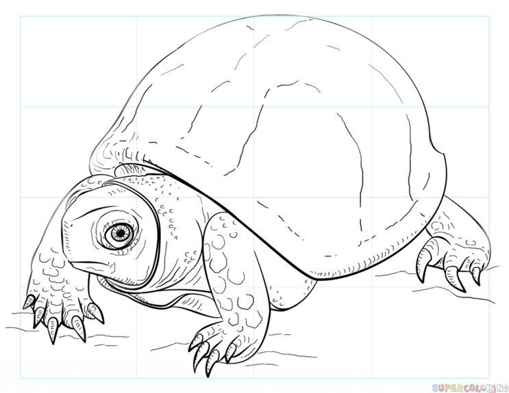 743x575 How To Draw An Ornate Box Turtle Step By Step Drawing Tutorials