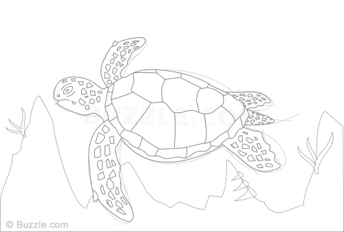 500x337 Learn How To Draw A Sea Turtle Using These Easy Instructions