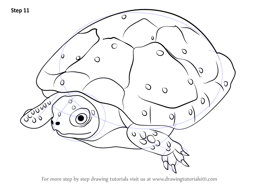 846x600 Learn How To Draw A Spotted Turtle (Turtles And Tortoises) Step By