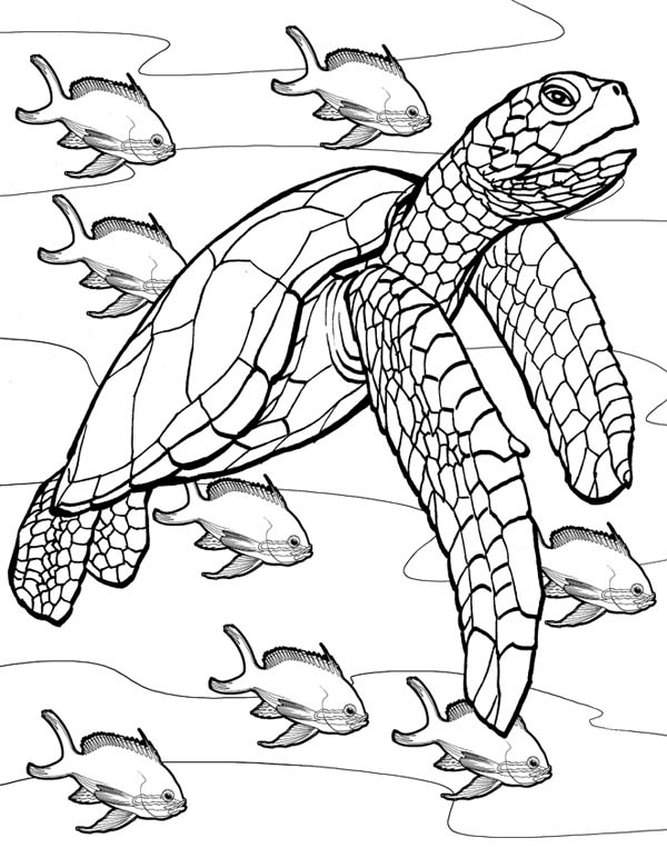 600x763 The Jurney Of Sea Turtle Free Coloring Page